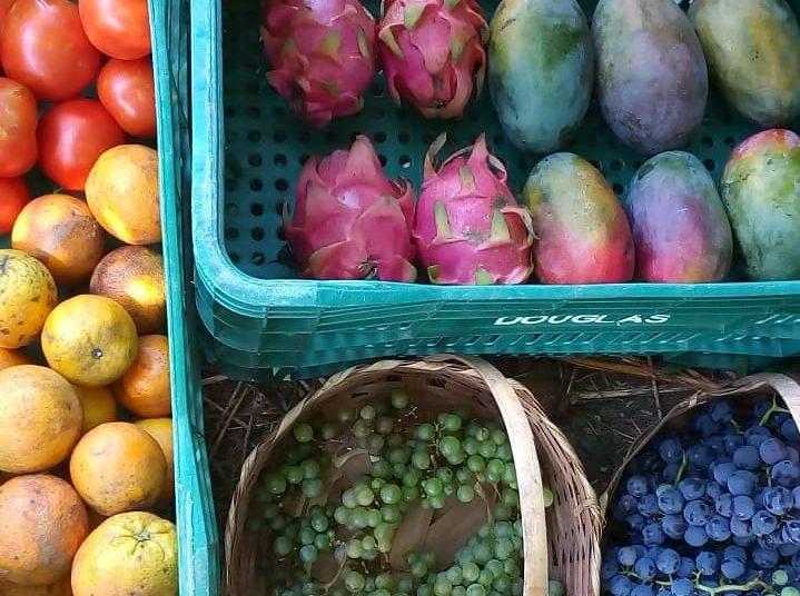 Frutas do Galpao dos Platanos